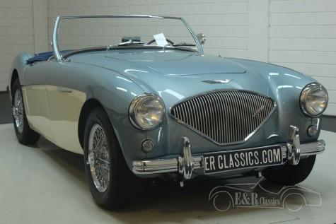 Austin-Healey 100-4 BN1 1954  for sale