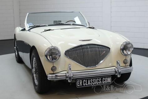 Predaj Austin Healey 100-4 BN2 1956