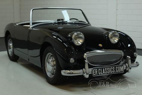 Austin Healey Sprite MK1 1959 for sale
